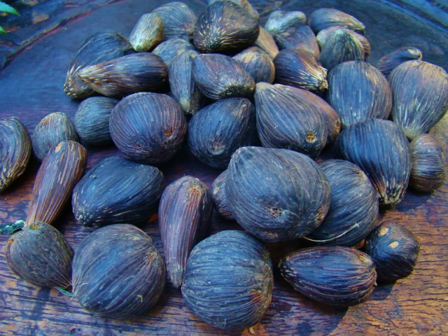 Ikin Ifa Sacred Palm Nuts