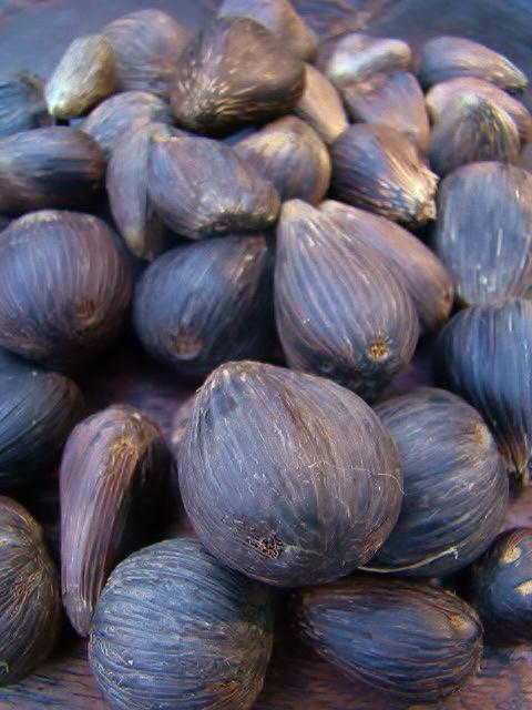 ikin ifa, ifa palm nuts, hand of ifa, babalawo, babalao, orisa, yoruba ifa, orisa divination,