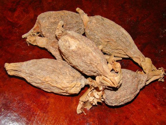 Ataare Pepper Pods Yoruba Ifa Supplies