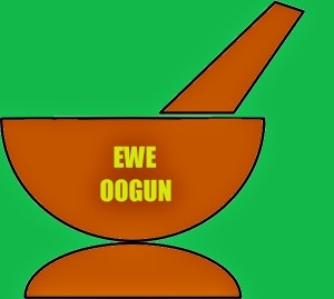 Ewe Amunimuye for Ewe Oogun Yoruba Ifa Leaves