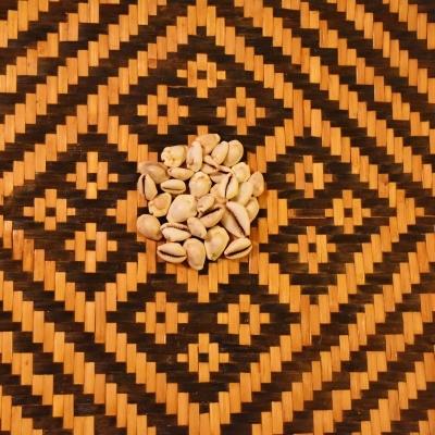 Yoruba Cowrie Shells Authentic Ifa Shrine Supplies