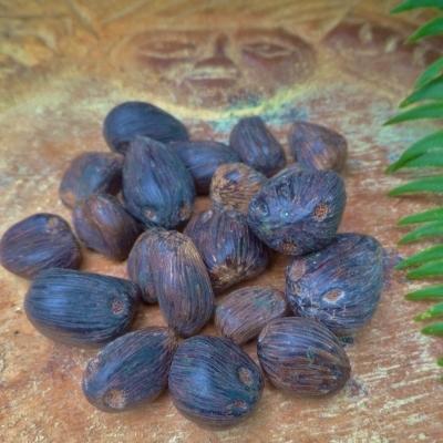 4 Eye Ikin Ifa Hand of Ifa for Women 20 Palm Nuts of Orunmila