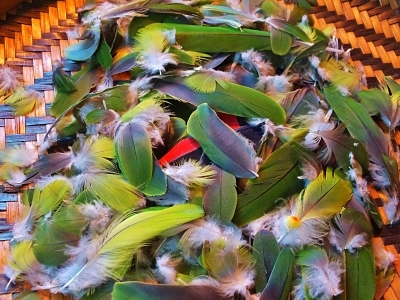 Ethically Sourced Amazon Parrot Feathers Caboclo da Mata Jurema Preta Craft Use