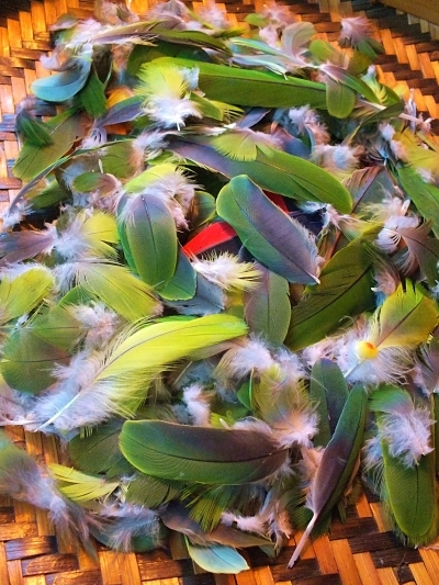 Jurema Preta, Caboclo da Mata Parrot Feathers