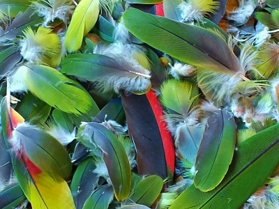 Green Parrot Feather Lot farinadeolokun.com